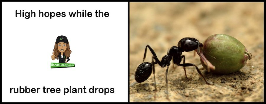 High hopes for anybody who's smarter than a little ant